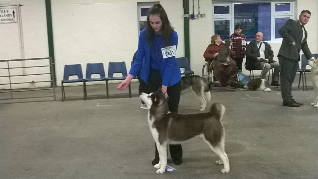 Cyrus at Manchester Champ Dog Show 2018 with Shania Bailey
