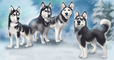 Cameo Anderson Sled Dog Husky Portrait Art 001