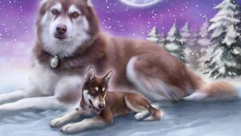 Cameo Anderson Sled Dog Husky Portrait Art 003