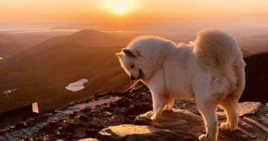 Samoyed Sunset Pic of the Month July 2018