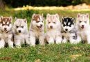 Puppies Article 3